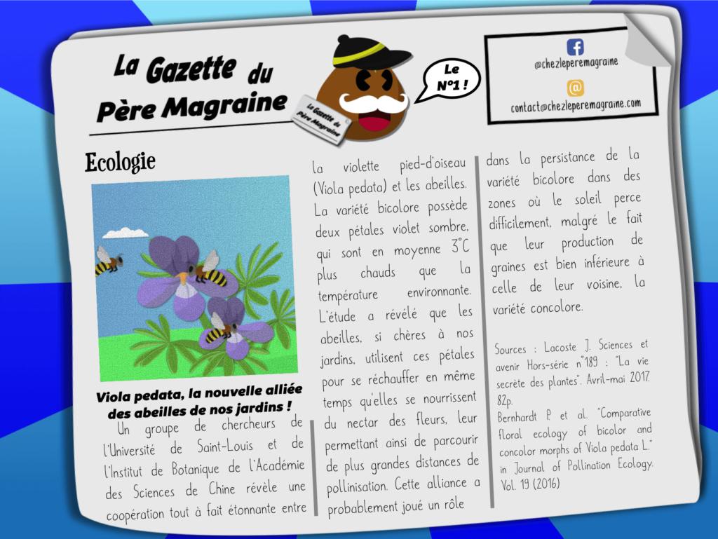 Gazette du Père Magraine n°1 - Viola pedata