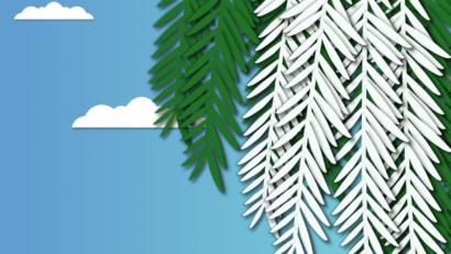 Header Canard Coureur 3 - La leçon de vie du séquoia albinos