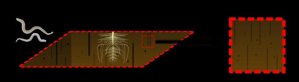 MP4 Objet9 Évaluer le type de fonctionnement de son sol