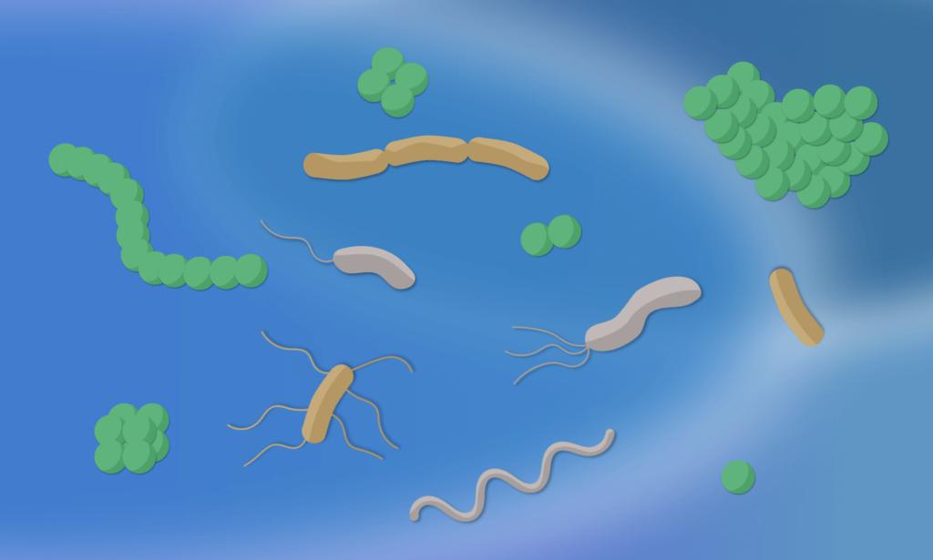 Header Les Bactéries