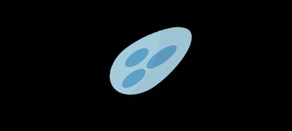 Protozoaires du sol Objet2