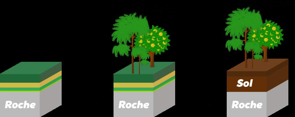 Succession écologique Objet6