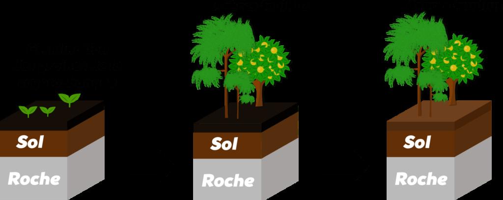Succession écologique Objet8