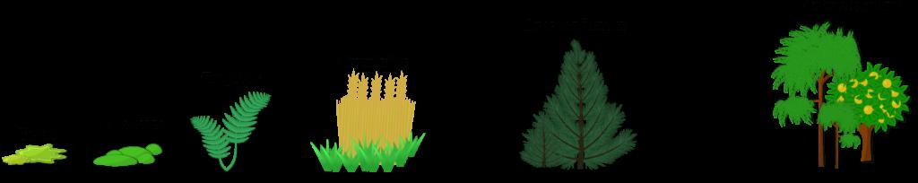 Succession écologique Objet9
