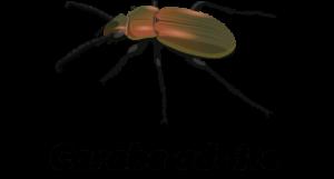 Larves de coléoptères du sol Objet1