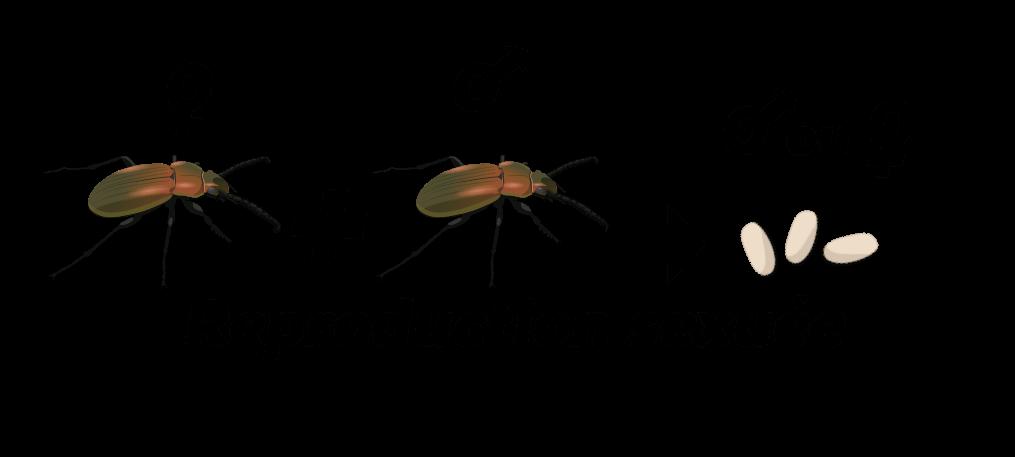 Larves de coléoptères du sol Objet7