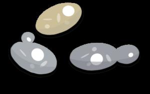 Champignons du sol et de la litière Objet1