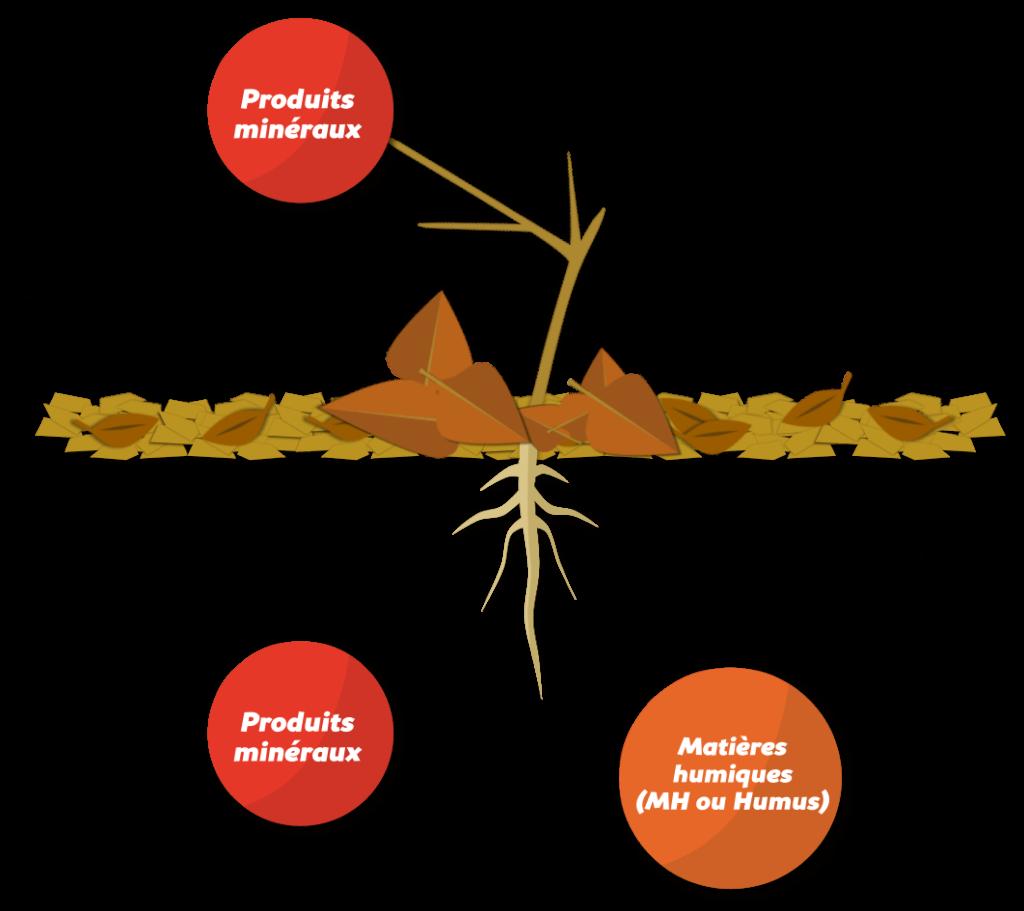 Fertilité naturelle des sols Objet13