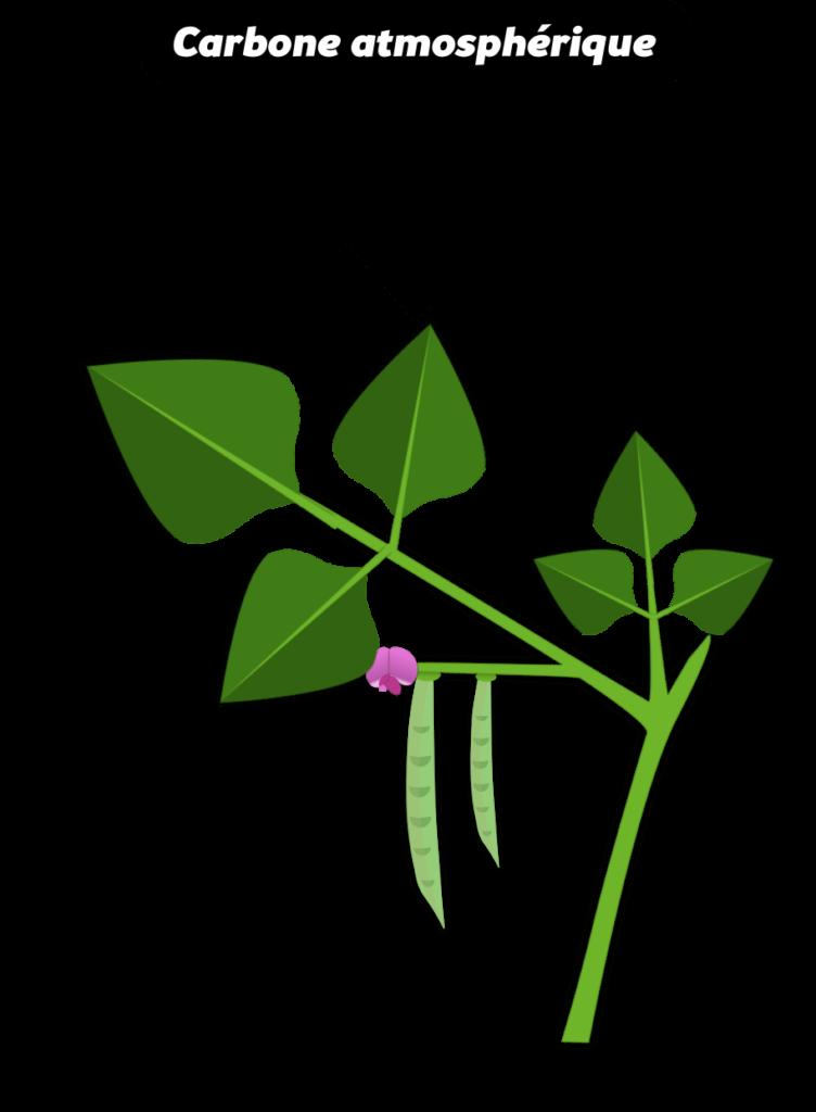 Fertilité naturelle des sols Objet5