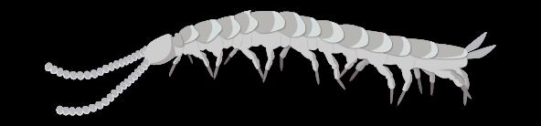 Myriapodes du sol Objet1