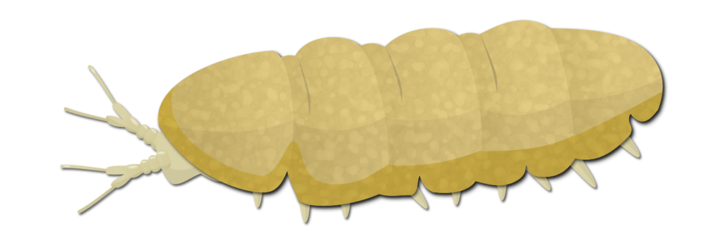 Myriapodes du sol Objet4