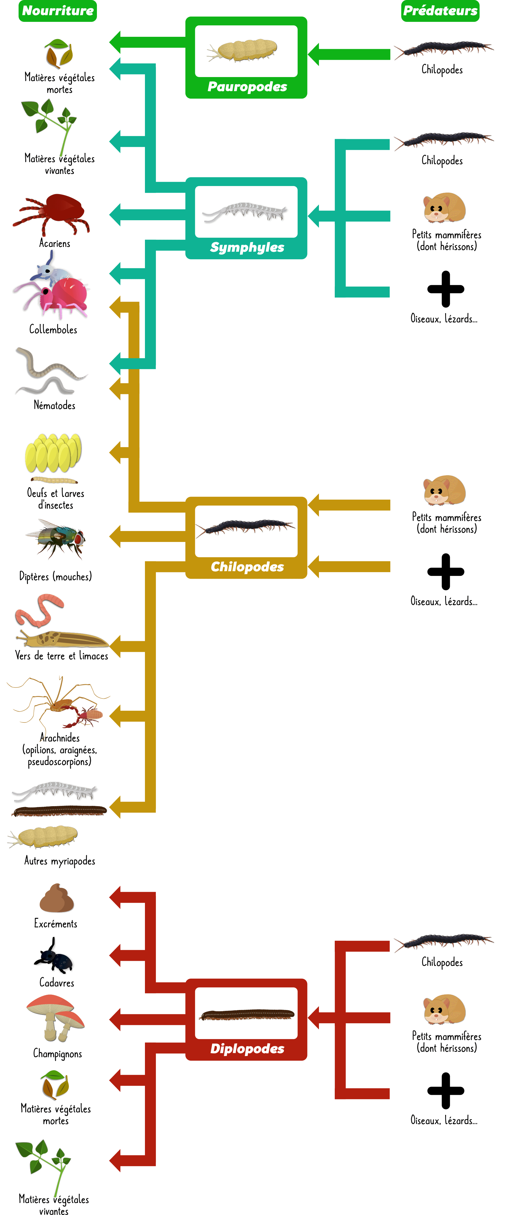 Myriapodes du sol Objet7