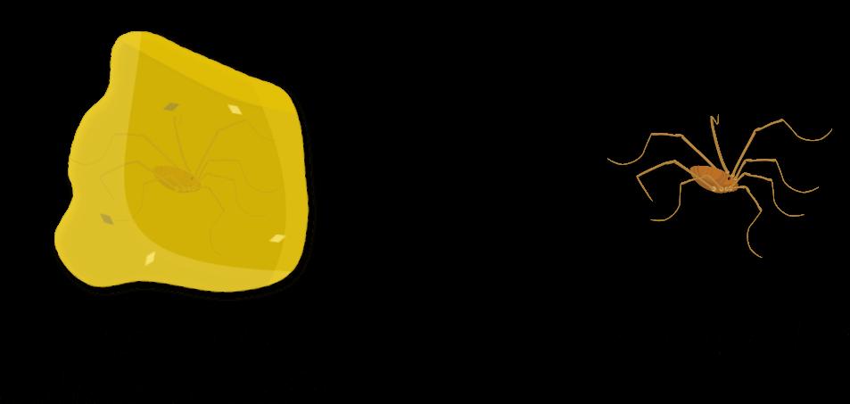 Opilions du sol Objet2