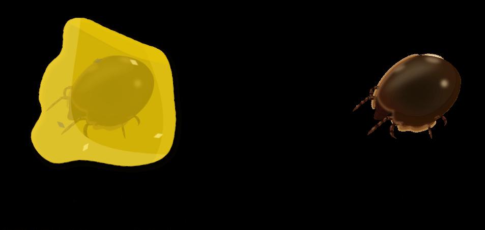 Acariens du solObjet5