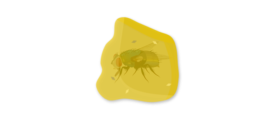 Larves de diptères du sol Objet1