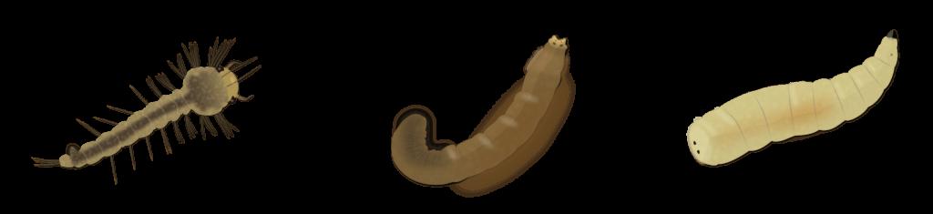Larves de diptères du sol Objet5