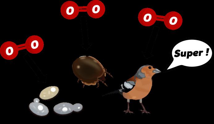 A001 aérobie lexique illustré