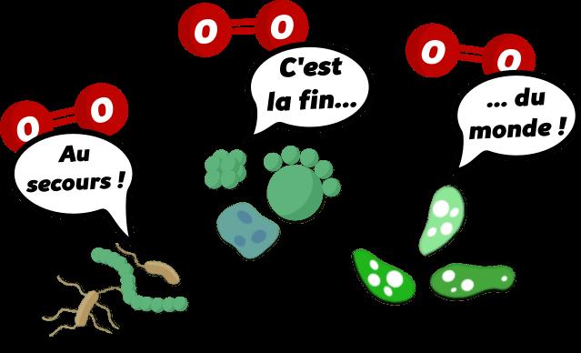 A002 anaérobie Lexique illustré
