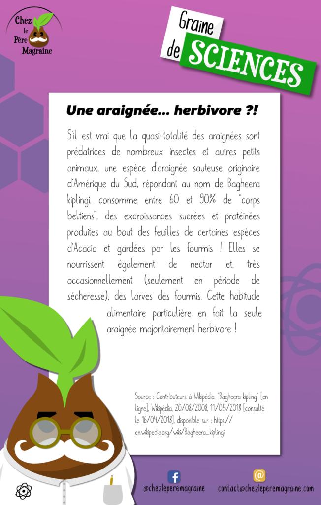 Graine de Sciences 20 Araignée herbivore