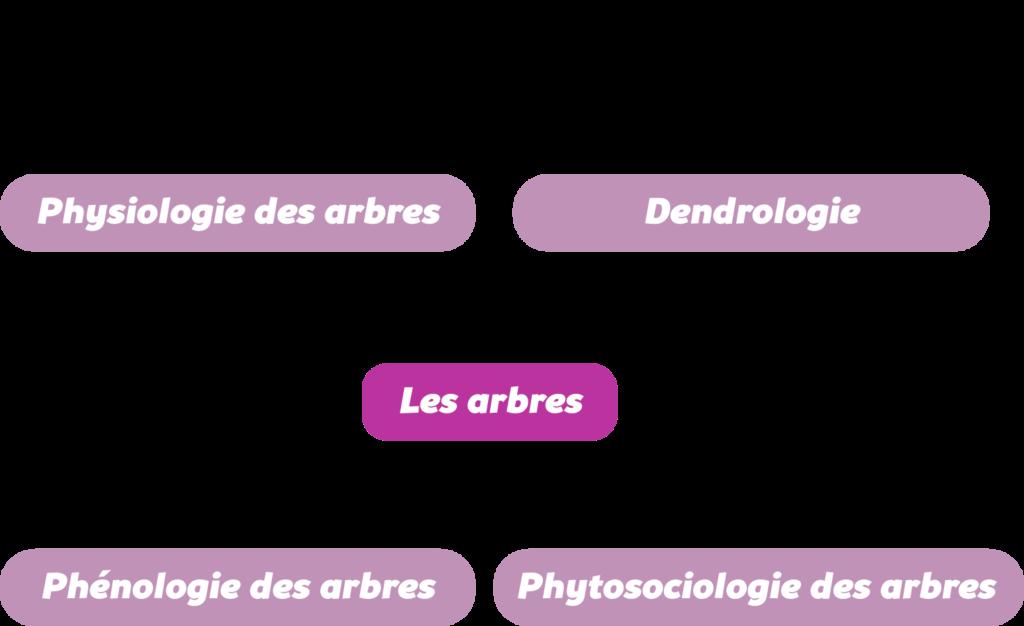L'approche systémique Objet3