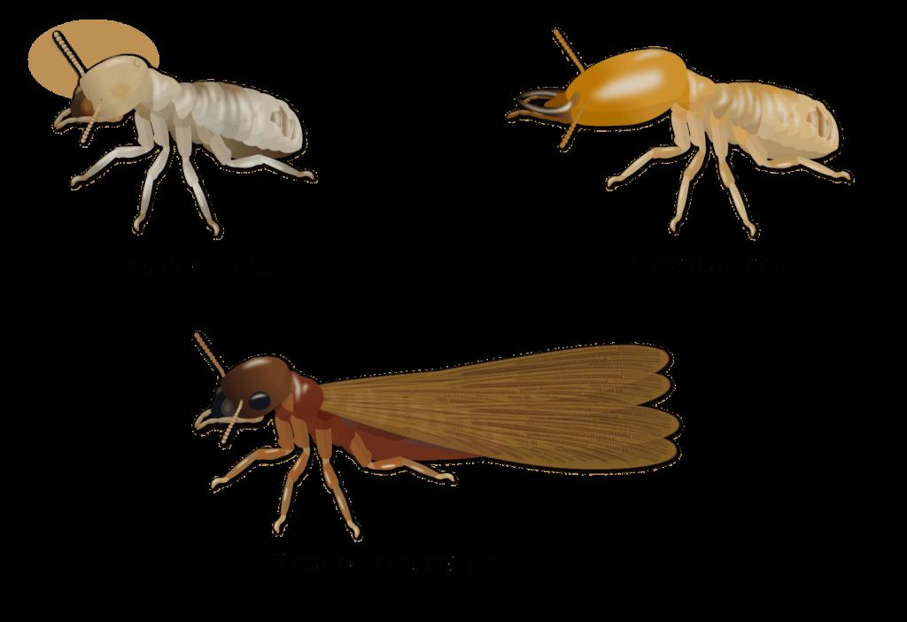 Termites Objet1