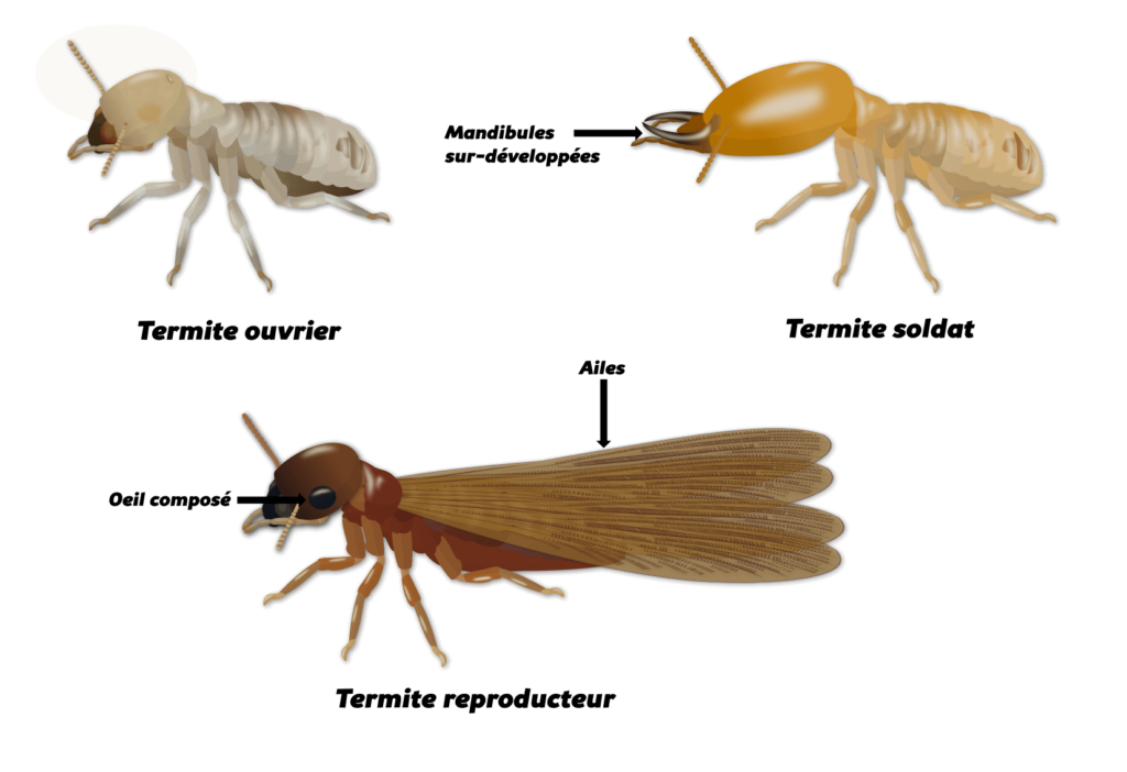 Termites Objet2
