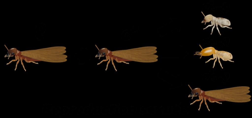 Termites Objet3