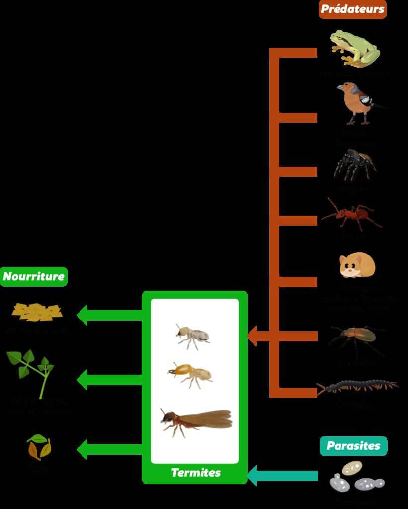 Termites Objet4
