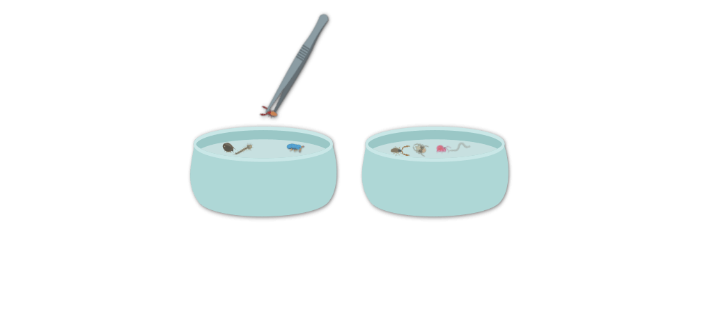 Analyser la microfaune de son sol Objet13