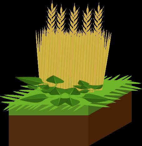 Engrais verts Objet10