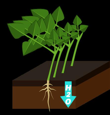 Engrais verts Objet2