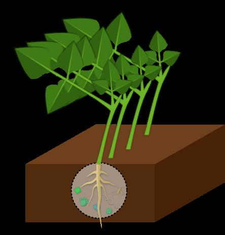 Engrais verts Objet4