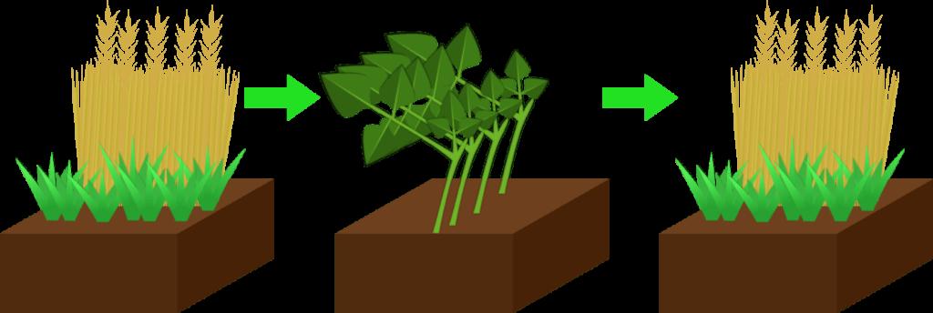 Engrais verts Objet8